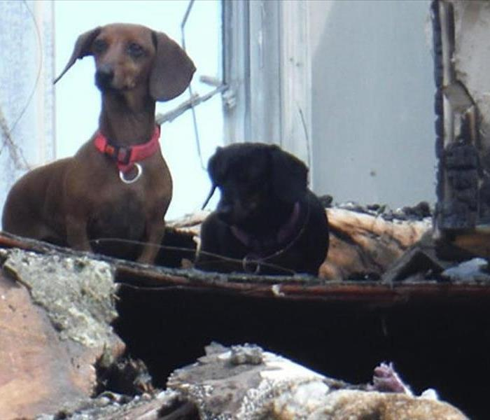 Community Pet Fire Escape Plan For York County