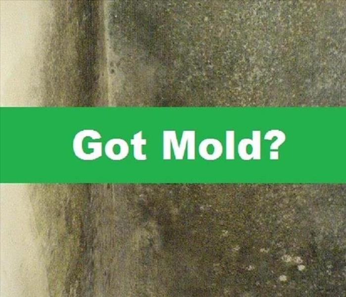 Mold Remediation The 5 Principles of Mold Remediation In Fort Mill