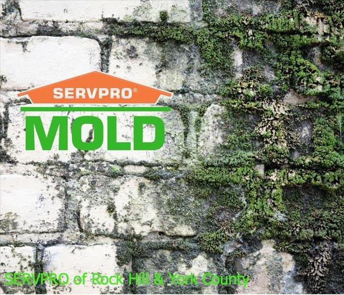 Mold Remediation Is That Mold In My Home?