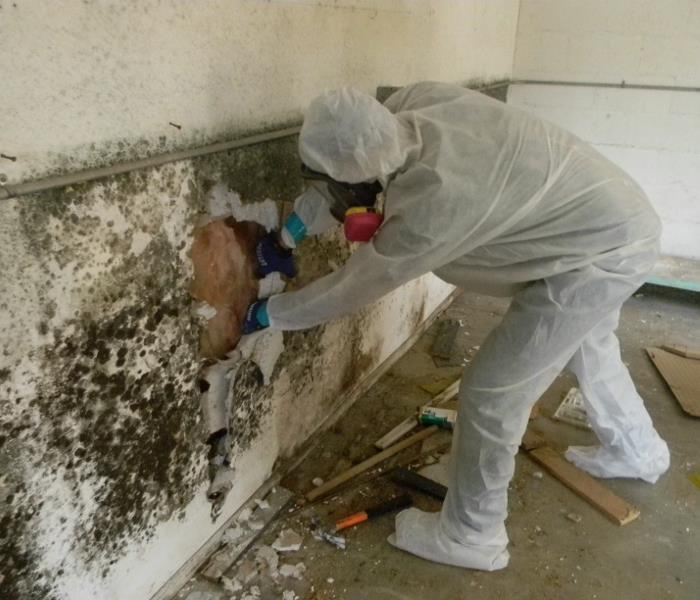 Mold Remediation Managing Mold In Fort Mill And Rock Hill