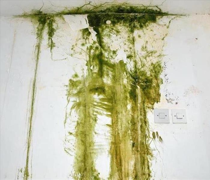Mold Remediation The Importance of Mold Remediation for Your Home in Tega Cay