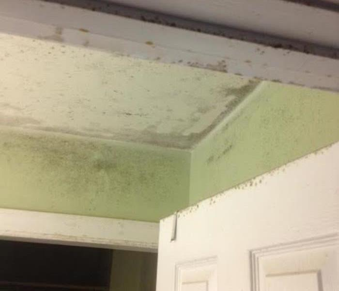Mold Remediation Top Rated Mold Cleanup Company In Rock Hill