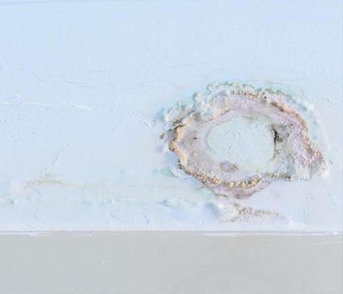 Mold Remediation Signs of Mold in Your Fort Mill Home