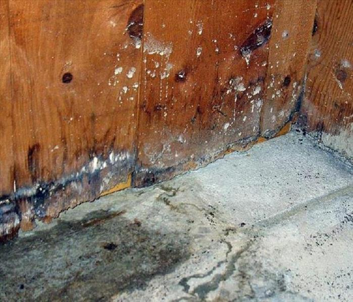 Mold Remediation Rock Hill mold damage - Identifying white mold growth in your home